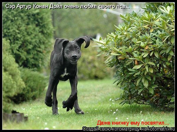 Котоматрица: Сэр Артур Конан Дойл очень любил своего пса... Даже книжку ему посвятил...