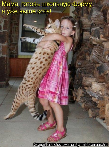 Котоматрица: Мама, готовь школьную форму, я уже выше кота!