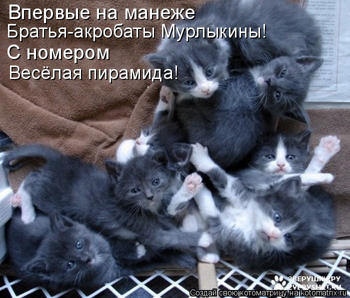 Котоматрица: Впервые на манеже Братья-акробаты Мурлыкины! С номером Весёлая пирамида!
