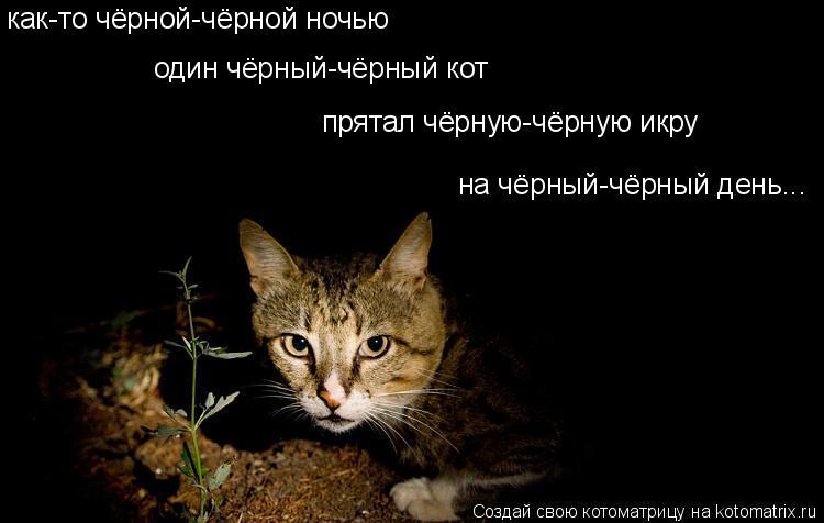Котоматрица: как-то чёрной-чёрной ночью на чёрный-чёрный день... один чёрный-чёрный кот прятал чёрную-чёрную икру