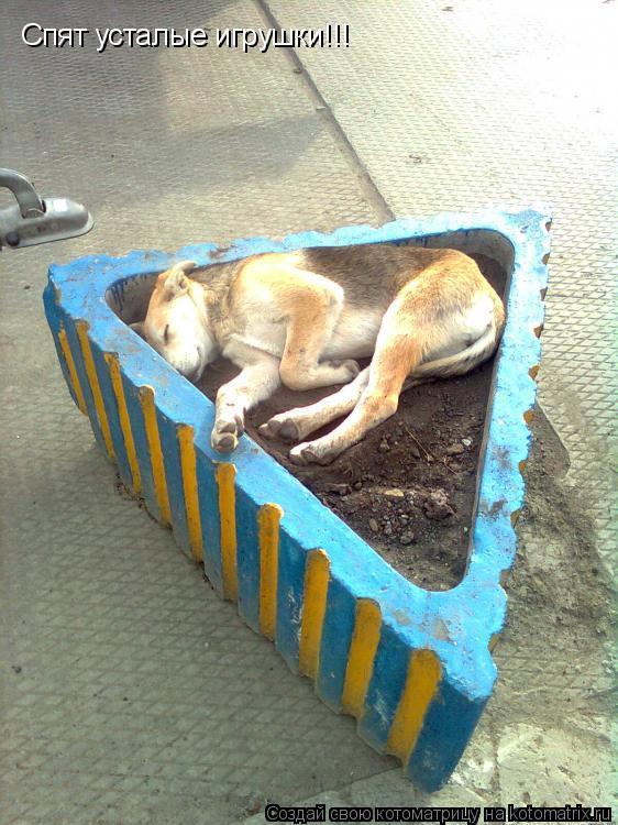 Котоматрица: Спят усталые игрушки!!!