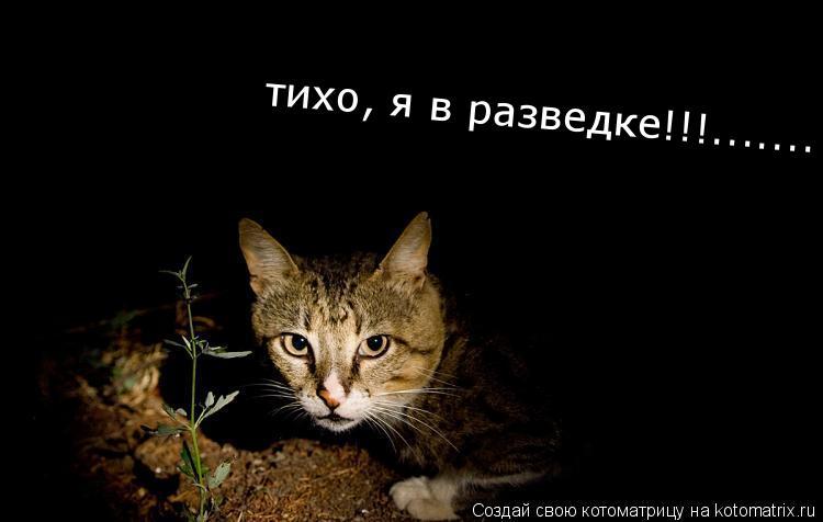 Котоматрица: тихо, я в разведке!!!.......