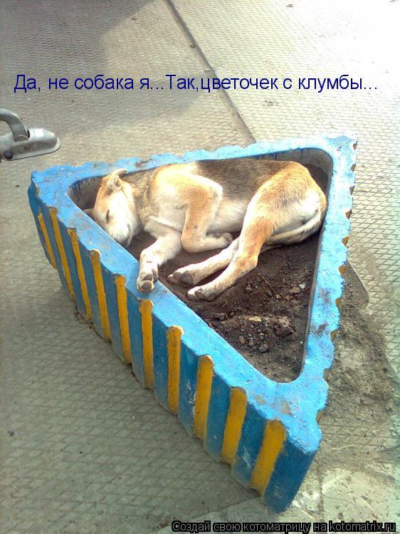 Котоматрица: Да, не собака я...Так,цветочек с клумбы...