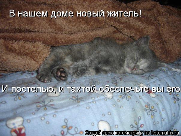 Котоматрица: В нашем доме новый житель! И постелью, и тахтой обеспечьте вы его.