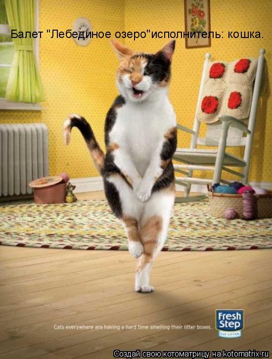 """Котоматрица: Балет """"Лебединое озеро""""исполнитель: кошка."""
