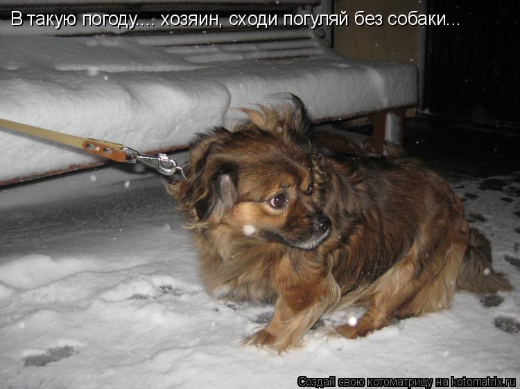 Котоматрица: В такую погоду.... хозяин, сходи погуляй без собаки...