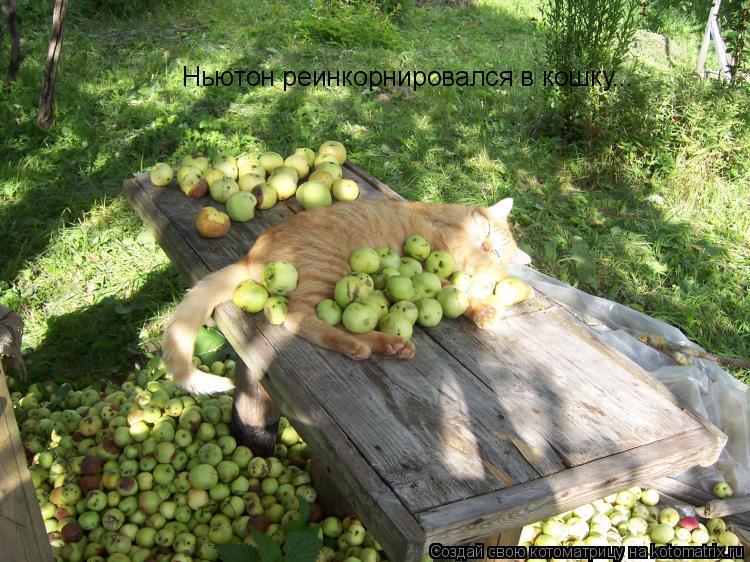 Котоматрица: Ньютон реинкорнировался в кошку...