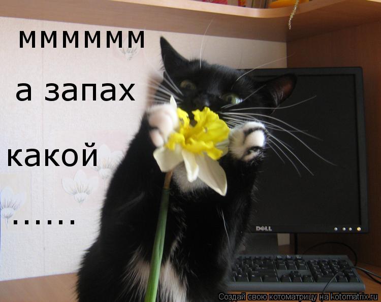 Котоматрица: мммммм а запах какой ......