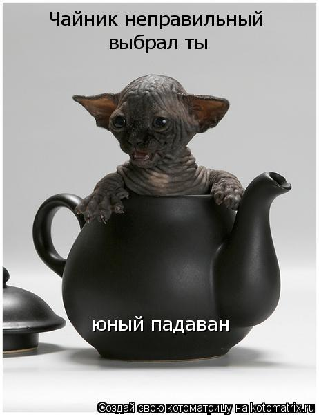 Котоматрица: Чайник неправильный выбрал ты юный падаван
