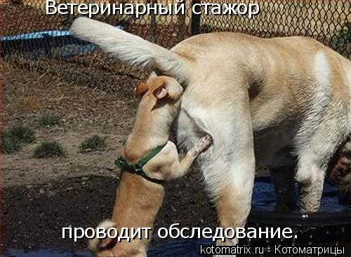 Котоматрица: Ветеринарный стажор  проводит обследование.