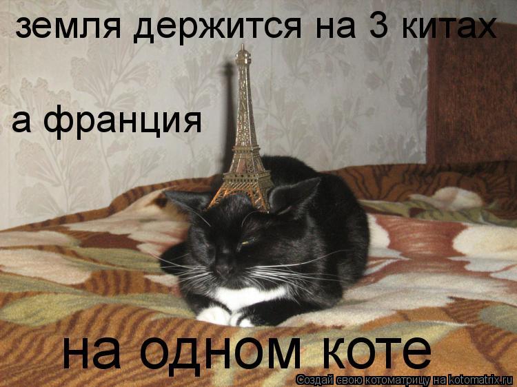 Котоматрица: земля держится на 3 китах а франция на одном коте