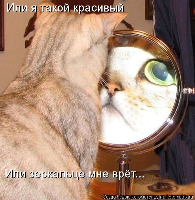 Котоматрица: Или я такой красивый Или зеркальце мне врёт...