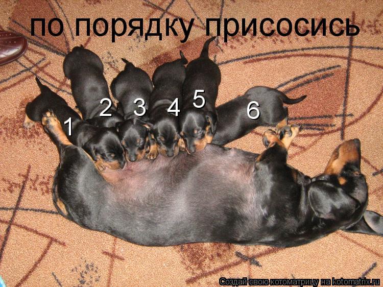 Котоматрица: по порядку присосись  1 2   3   4     5   6