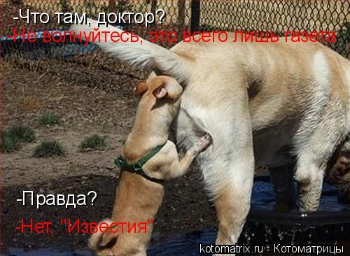 """Котоматрица: -Что там, доктор? -Не волнуйтесь, это всего лишь газета -Правда? -Нет, """"Известия"""""""