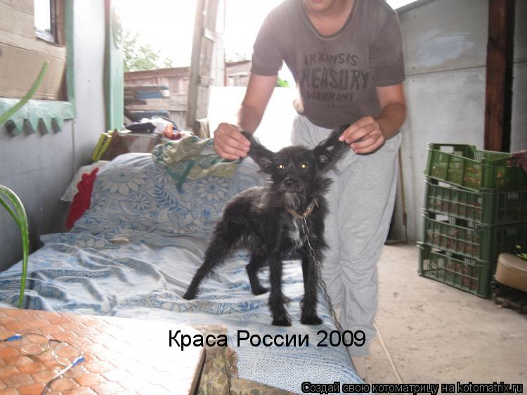 Котоматрица: Краса России 2009