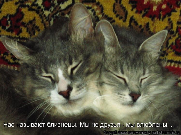 Котоматрица: Нас называют близнецы. Мы не друзья - мы влюблены...