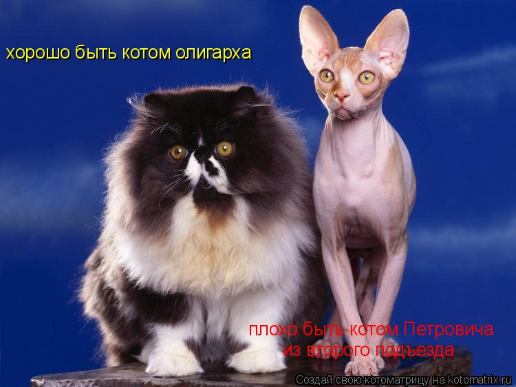 Котоматрица: хорошо быть котом олигарха плохо быть котом Петровича из второго подъезда