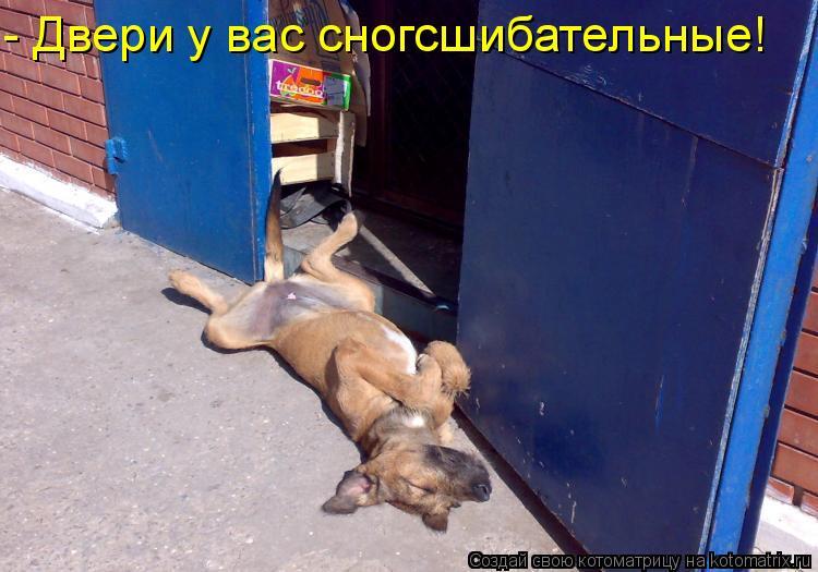 Котоматрица: - Двери у вас сногсшибательные!