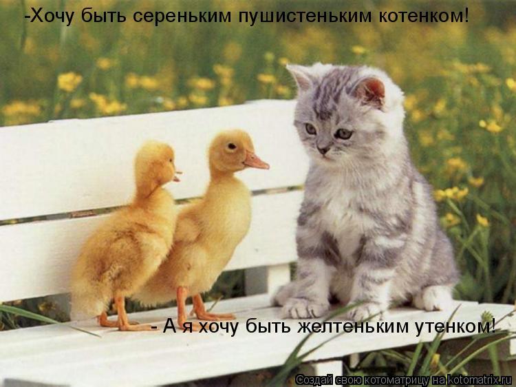 Котоматрица: -Хочу быть сереньким пушистеньким котенком! - А я хочу быть желтеньким утенком!