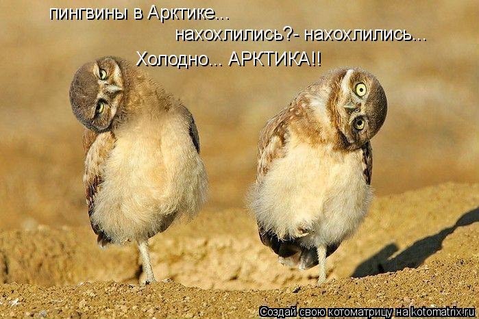 Котоматрица: пингвины в Арктике... нахохлились?- нахохлились... Холодно... АРКТИКА!!