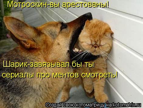 Котоматрица: Мотроскин-вы арестованы!  Шарик-завязывал бы ты  сериалы про ментов смотреть!
