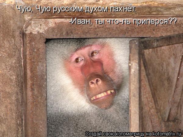 Котоматрица: Чую, Чую русским духом пахнет. -Иван, ты что-ль приперся??
