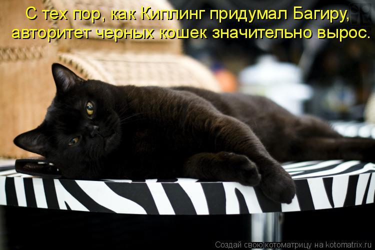 Котоматрица: С тех пор, как Киплинг придумал Багиру,  авторитет черных кошек значительно вырос.