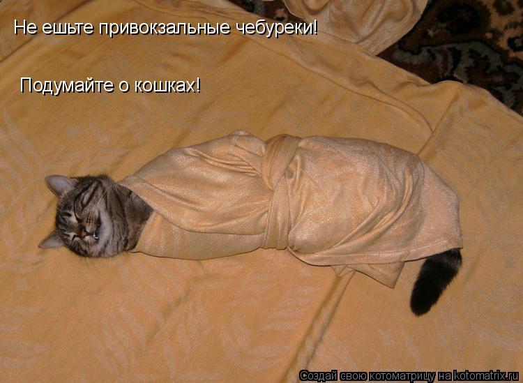 Котоматрица: Не ешьте привокзальные чебуреки! Подумайте о кошках!