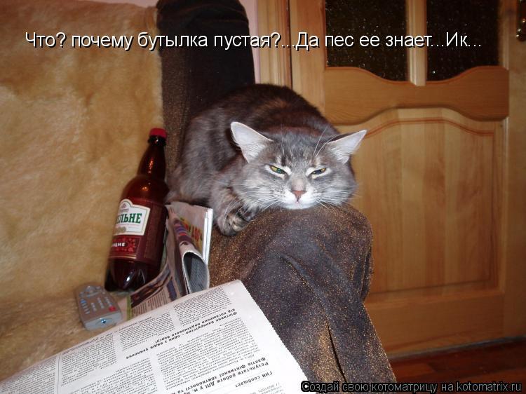 Котоматрица: Что? почему бутылка пустая?...Да пес ее знает...Ик...