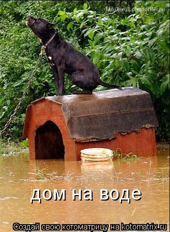 Котоматрица: дом на воде