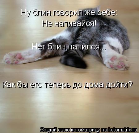 Котоматрица: Ну блин,говорил же себе: Не напивайся! Нет блин,напился... Как бы его теперь до дома дойти?
