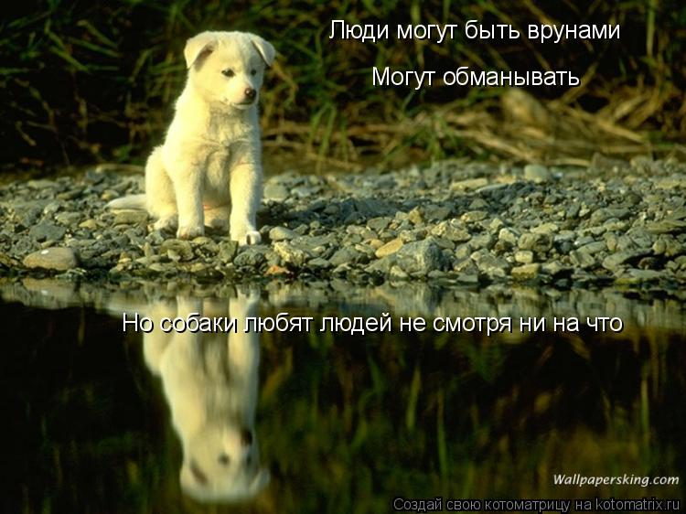 Котоматрица: Люди могут быть врунами  Могут обманывать  Но собаки любят людей не смотря ни на что