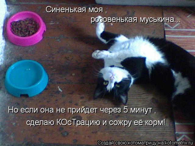 Котоматрица: Синенькая моя ,  розовенькая муськина... Но если она не прийдет через 5 минут , сделаю КОсТрацию и сожру её корм!