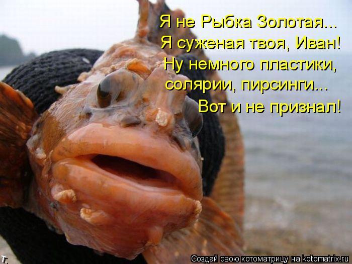 Котоматрица: Я не Рыбка Золотая... Я суженая твоя, Иван! Ну немного пластики,  солярии, пирсинги... Вот и не признал!