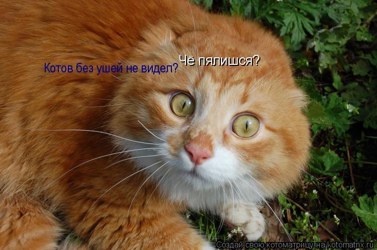 Котоматрица: Чё пялишся? Котов без ушей не видел?