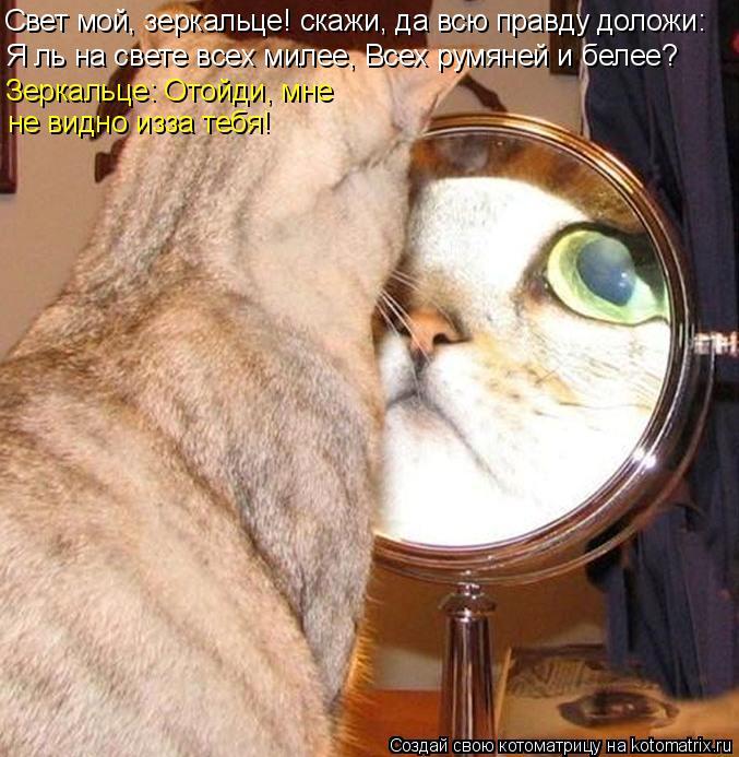 Котоматрица: Свет мой, зеркальце! скажи, да всю правду доложи: Я ль на свете всех милее, Всех румяней и белее? Зеркальце: Отойди, мне не видно изза тебя!