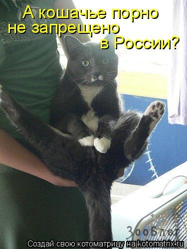 Котоматрица: А кошачье порно  не запрещено  в России?