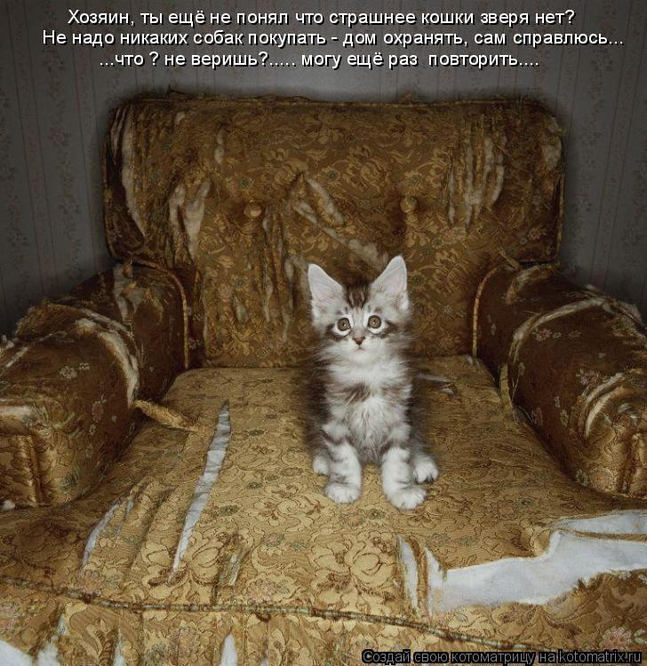 Котоматрица: Хозяин, ты ещё не понял что страшнее кошки зверя нет?   Не надо никаких собак покупать - дом охранять, сам справлюсь... ...что ? не веришь?..... могу
