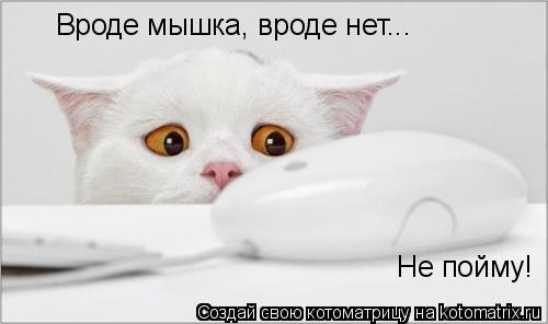 Котоматрица: Вроде мышка, вроде нет... Не пойму!