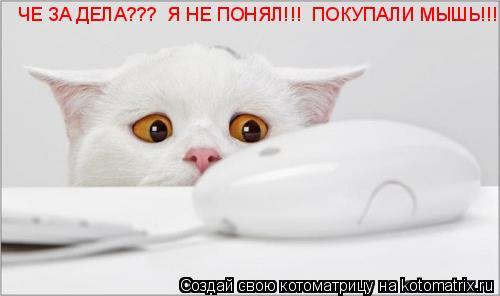 Котоматрица: ЧЕ ЗА ДЕЛА???  Я НЕ ПОНЯЛ!!!  ПОКУПАЛИ МЫШЬ!!! ЧЕ ЗА ДЕЛА???  Я НЕ ПОНЯЛ!!!  ПОКУПАЛИ МЫШЬ!!!