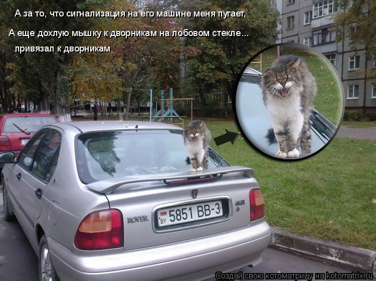 Котоматрица: А за то, что сигнализация на его машине меня пугает,  А еще дохлую мышку к дворникам на лобовом стекле... привязал к дворникам