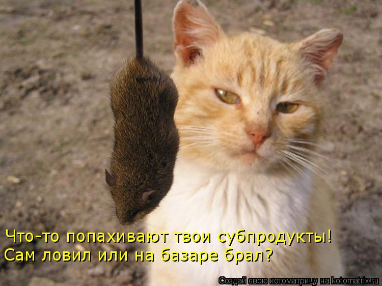 Котоматрица: Что-то попахивают твои субпродукты! Сам ловил или на базаре брал?