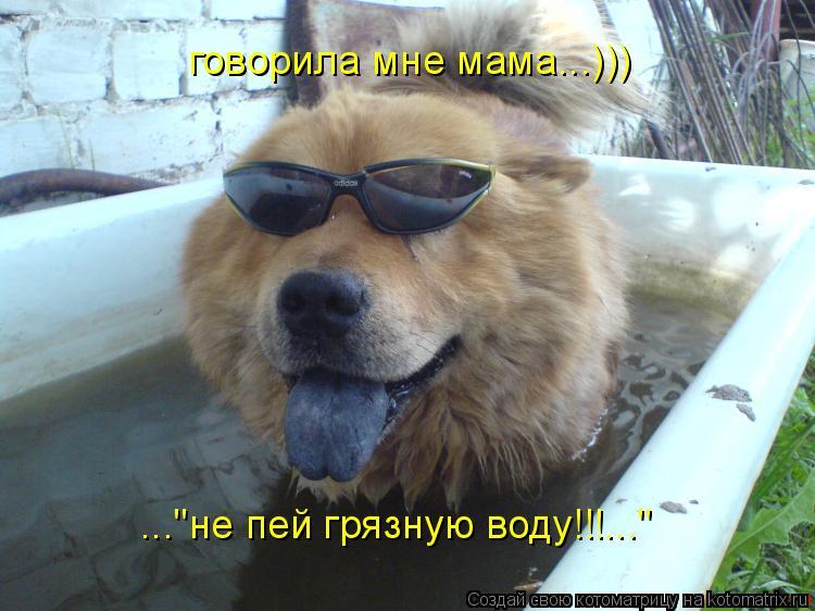 """Котоматрица: говорила мне мама...))) ...""""не пей грязную воду!!!..."""""""