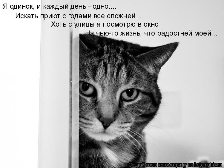 Котоматрица: Я одинок, и каждый день - одно.... Искать приют с годами все сложней... Хоть с улицы я посмотрю в окно На чью-то жизнь, что радостней моей...