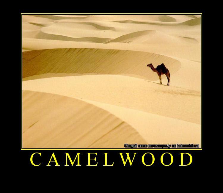 Котоматрица: camelwood