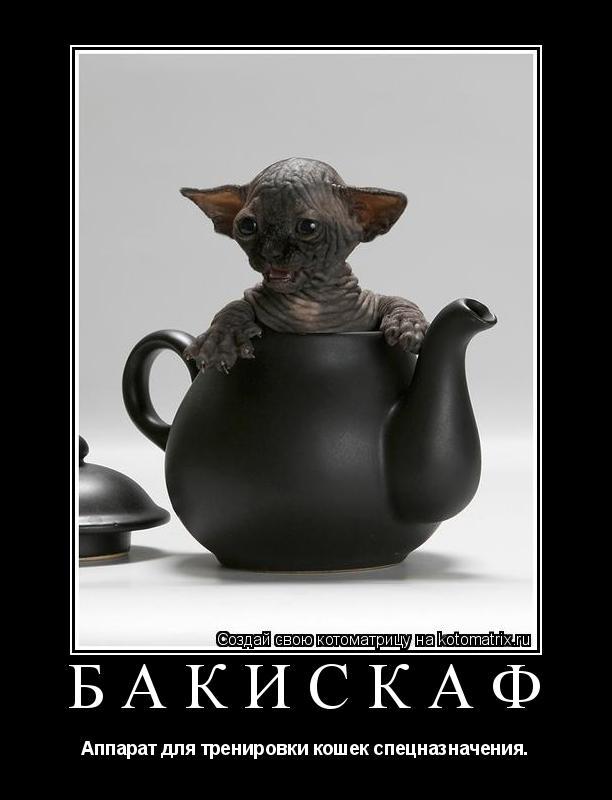 Котоматрица: бакискаф Аппарат для тренировки кошек спецназначения.