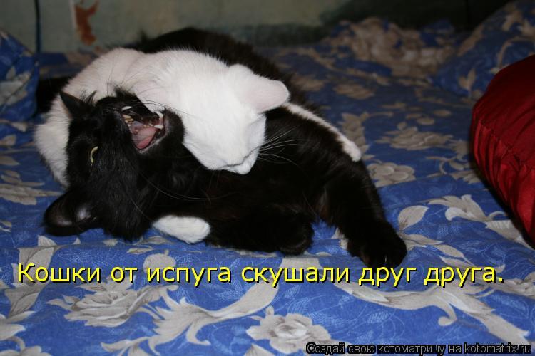 Котоматрица: Кошки от испуга скушали друг друга.