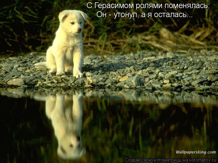 Котоматрица: С Герасимом ролями поменялась: Он - утонул, а я осталась...
