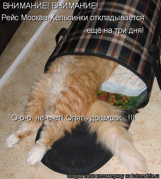Котоматрица: ВНИМАНИЕ! ВНИМАНИЕ! Рейс Москва-Хельсинки откладывается ещё на три дня! О-о-о, не-е-ет! Опять доширак...!!!