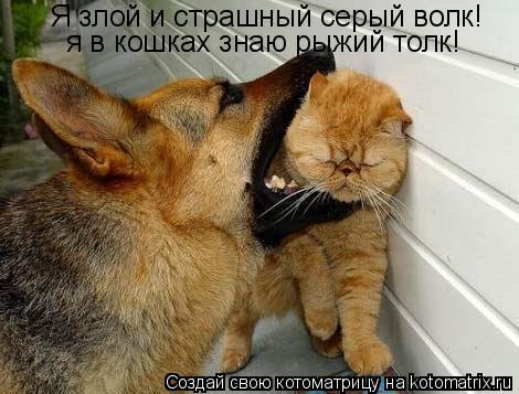 Котоматрица: Я злой и страшный серый волк! я в кошках знаю рыжий толк!